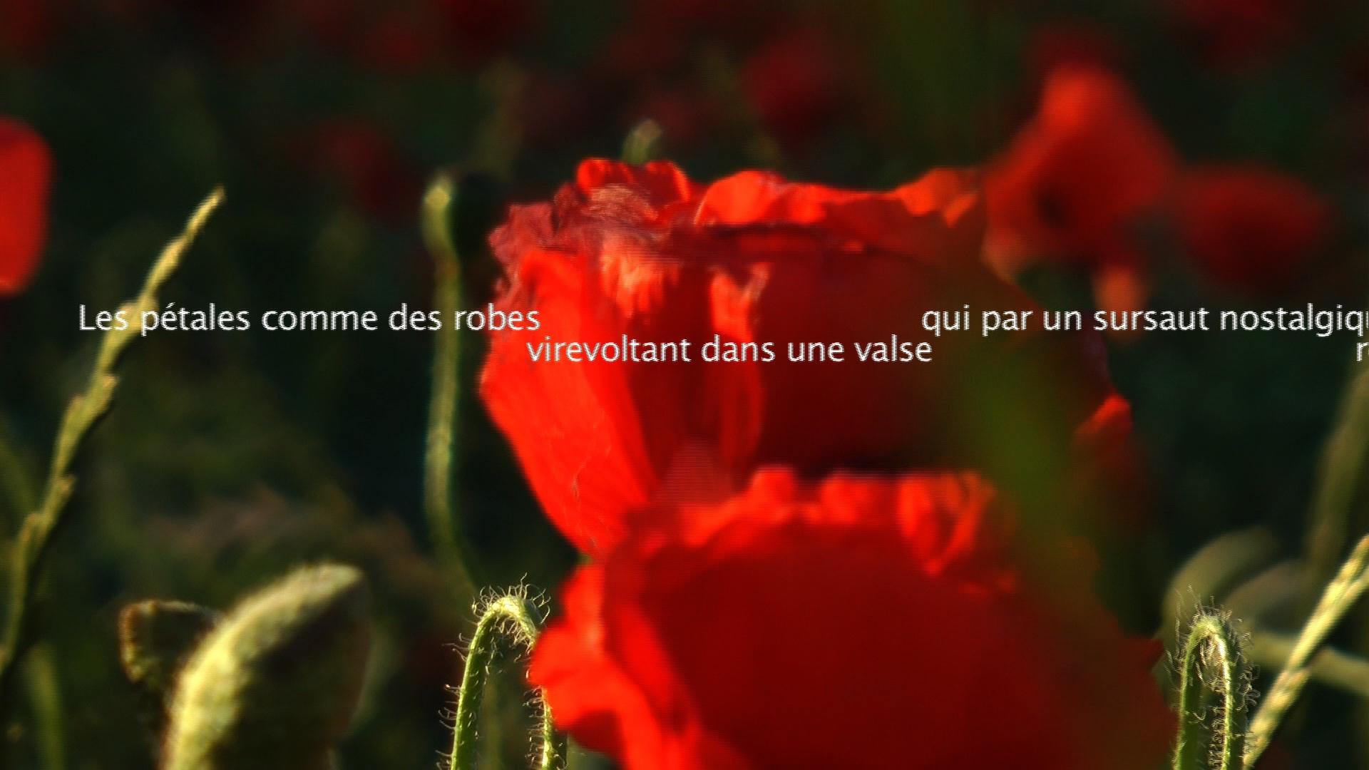 Le Murmure du monde - Les coquelicots - Blandine Armand - Créations vidéos
