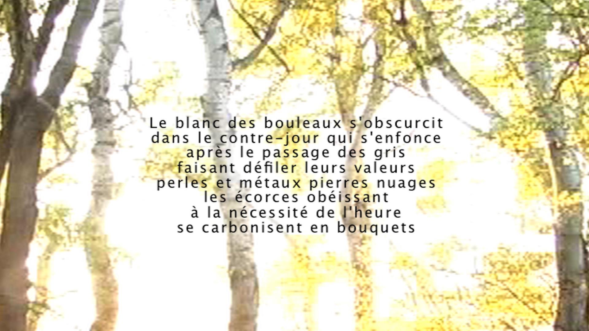 Le Murmure du monde - Contre soir - Blandine Armand - création vidéos