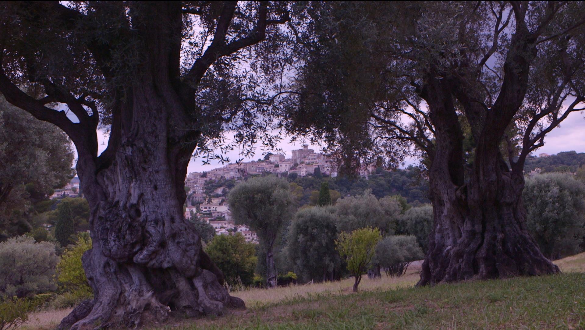 Renoir à Cagnes sur Mer 1 - Blandine Armand - Documentaires