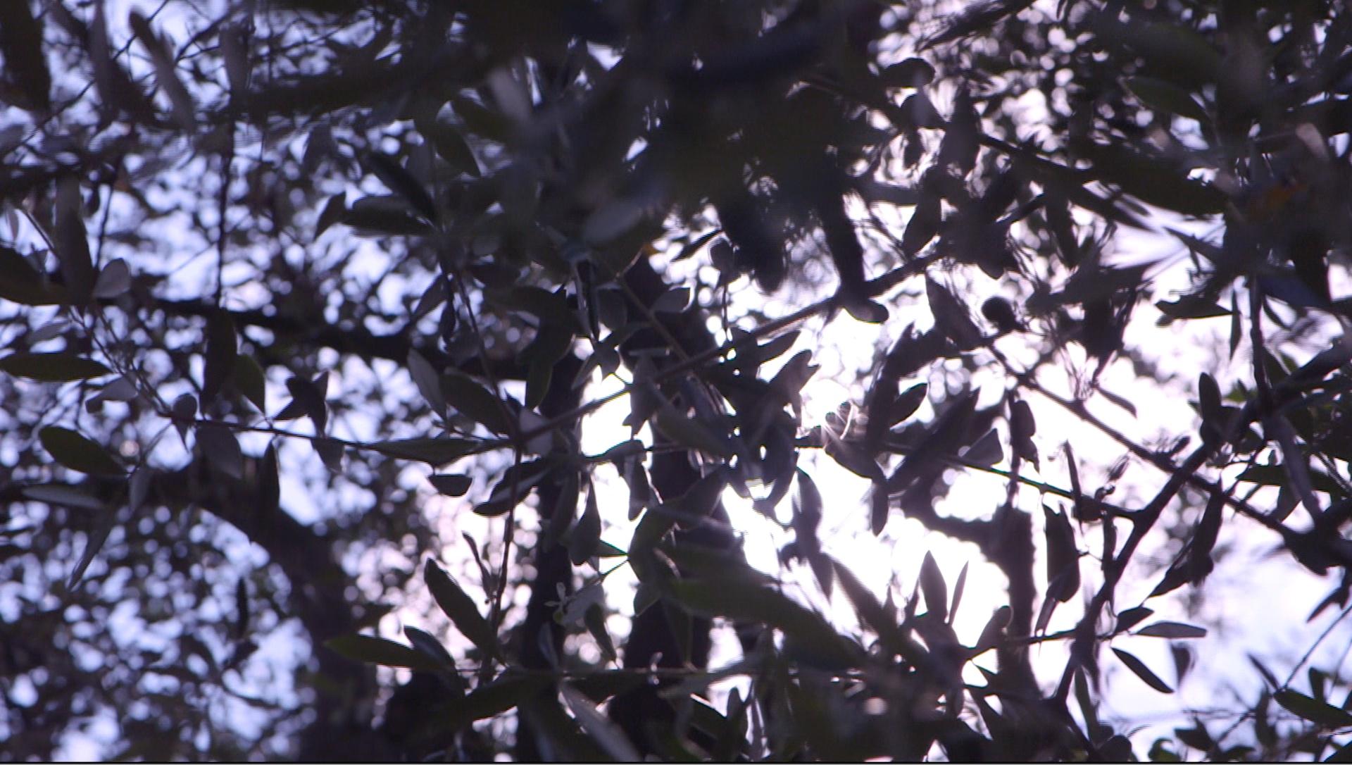 Renoir à Cagnes sur Mer 2 - Blandine Armand - Documentaires