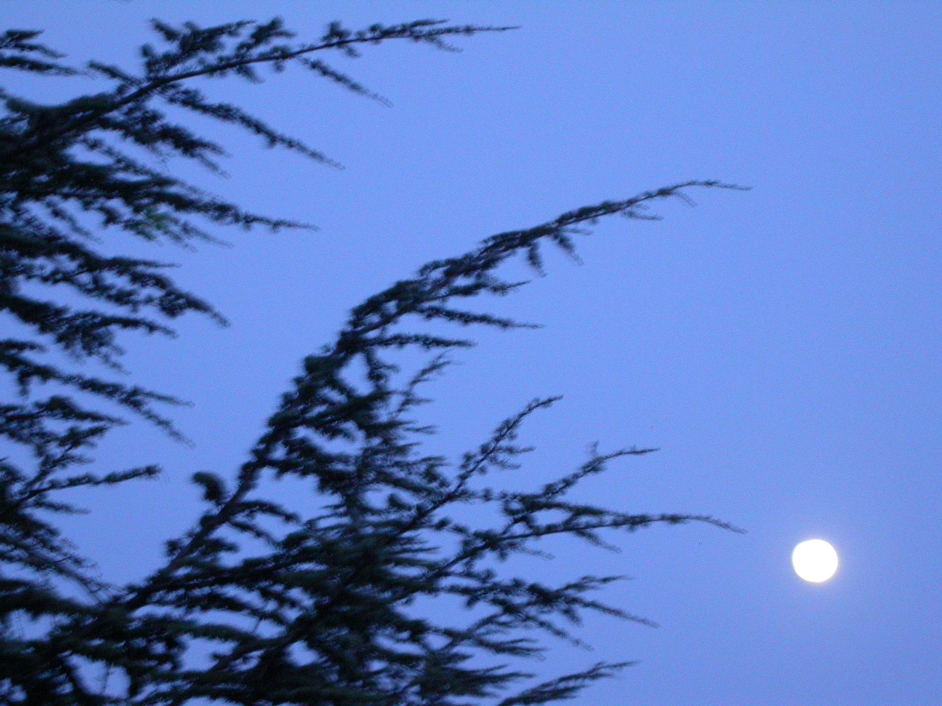 BLEU 4 (Les arbres dansent) - Blandine Armand - série photos
