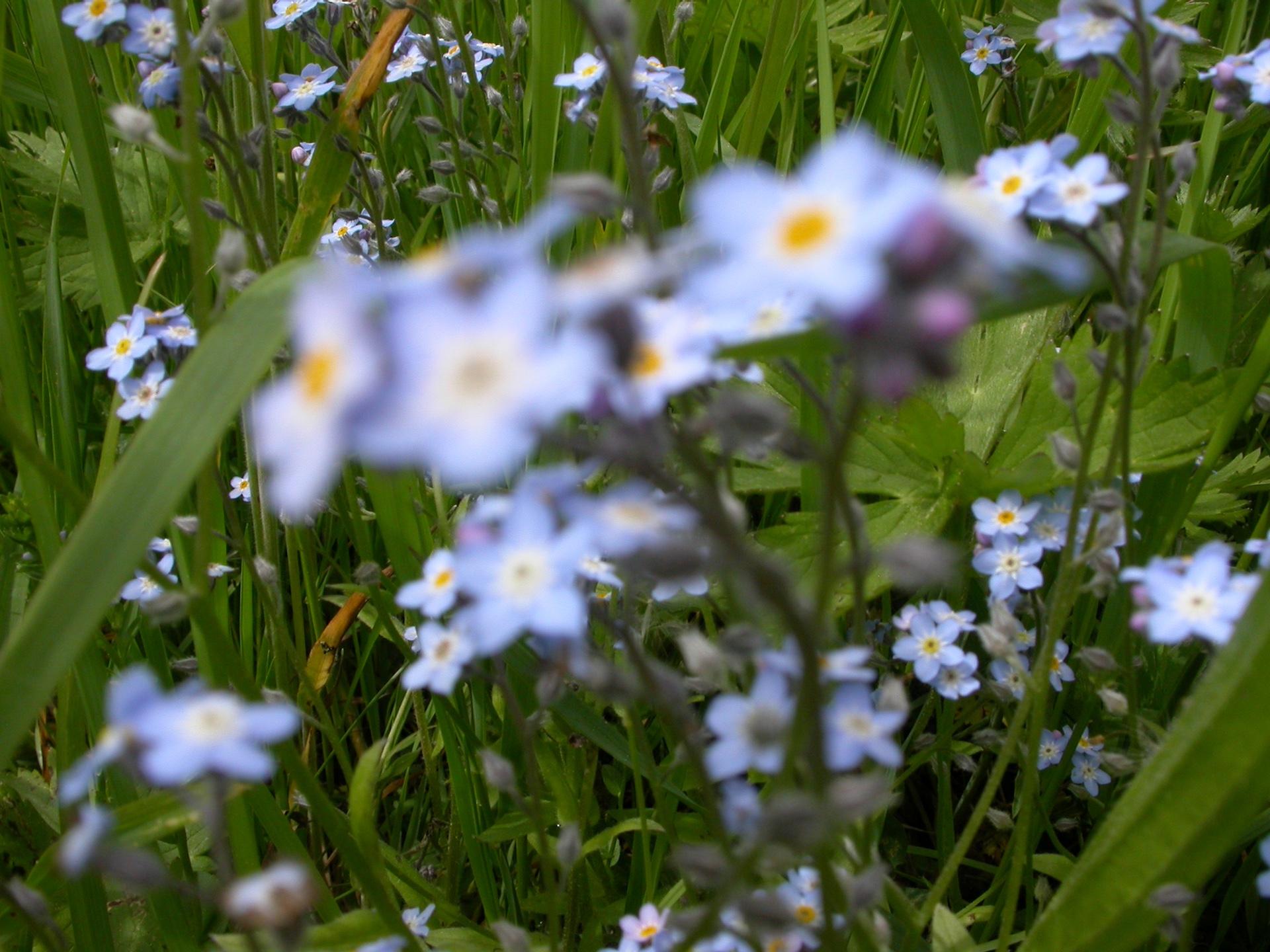 BLEU 8 (Fleurs) - Blandine Armand - série photos