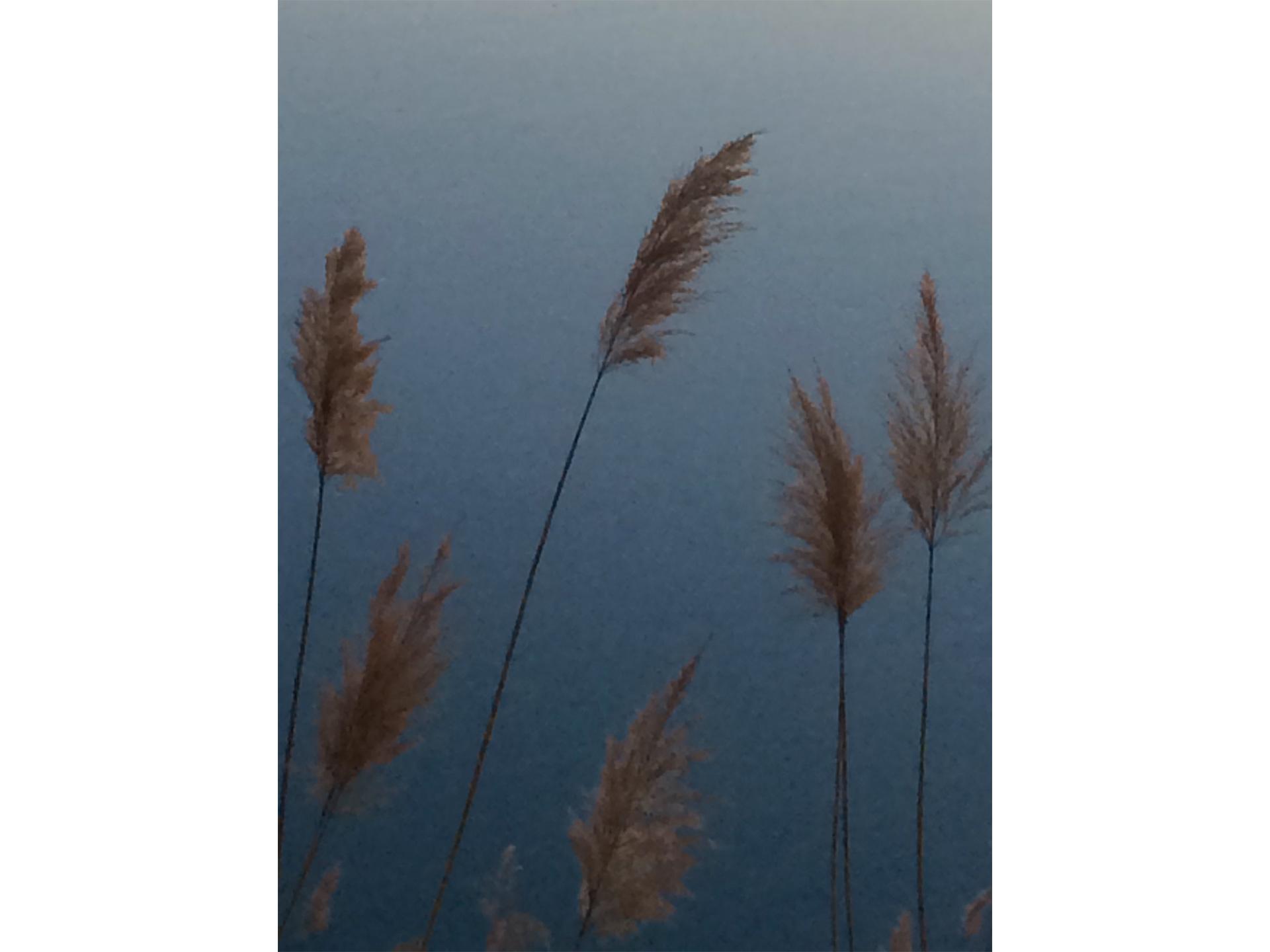 Entre Ciel et Terre _ 10- Les roseaux - Blandine Armand - série photos