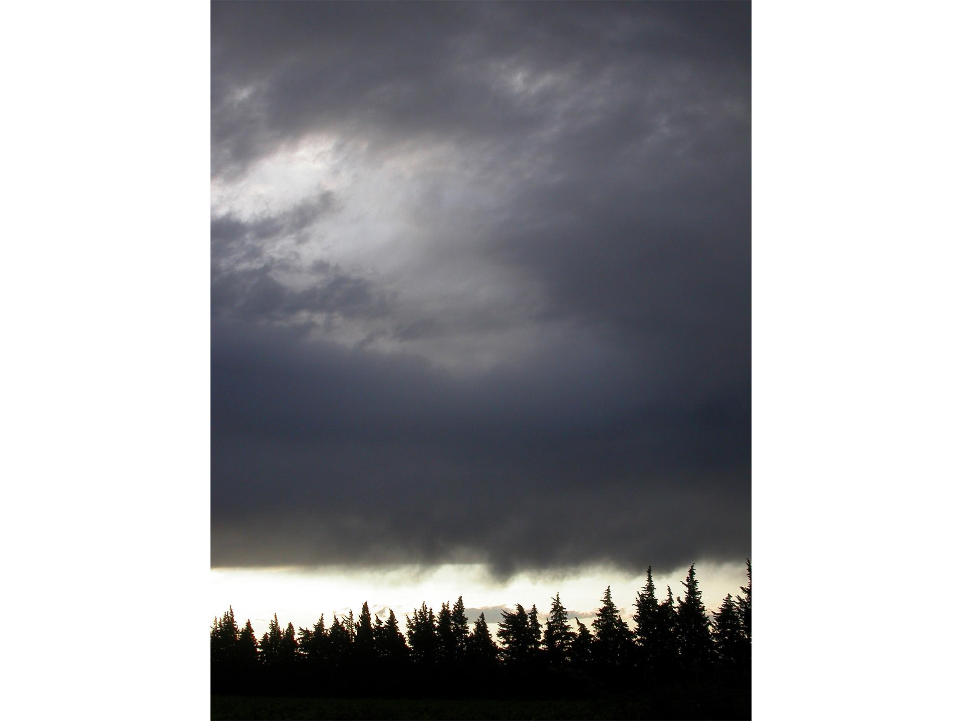 Entre Ciel et Terre _ 11- Rangées cypres - Blandine Armand - série photos