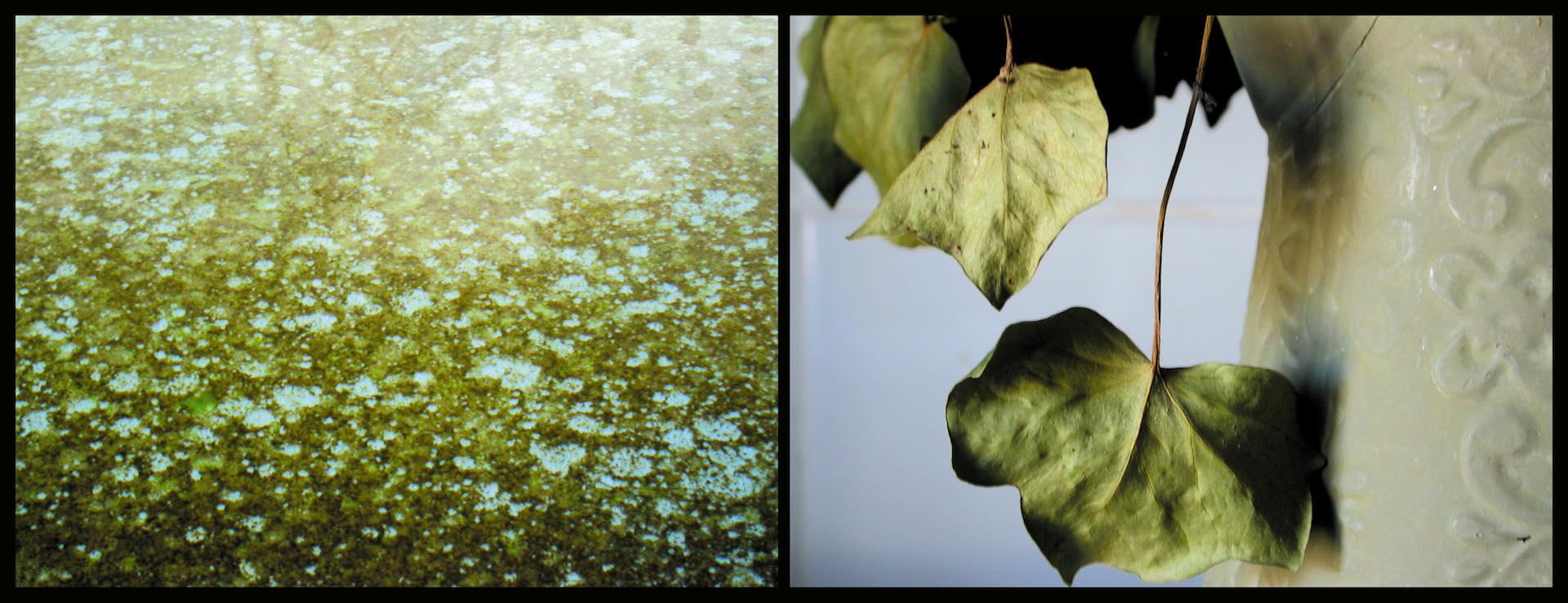 Journal# - 6. Nature morte - Blandine Armand - série photos