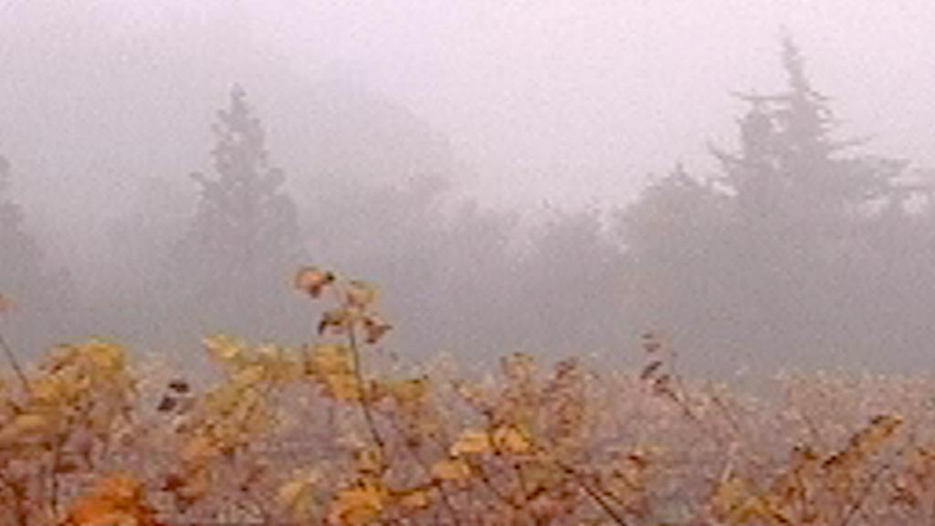 Le Murmure du monde - L'orée des vignobles 1 - Blandine Armand - créations vidéos