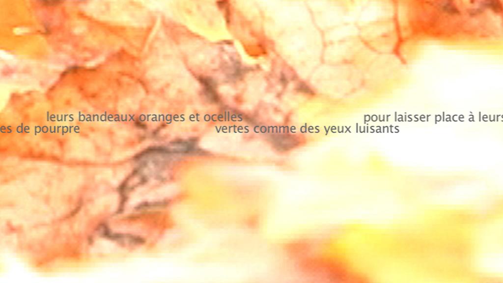 Le Murmure du monde - L'orée des vignobles 3 - Blandine Armand - créations vidéos