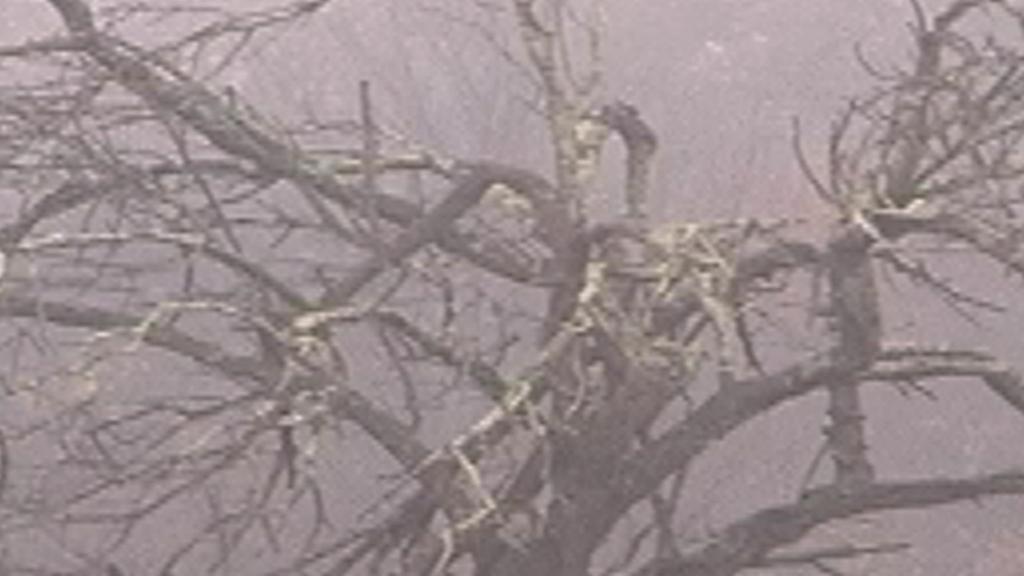 Le Murmure du monde - L'orée des vignobles 7 - Blandine Armand - créations vidéos
