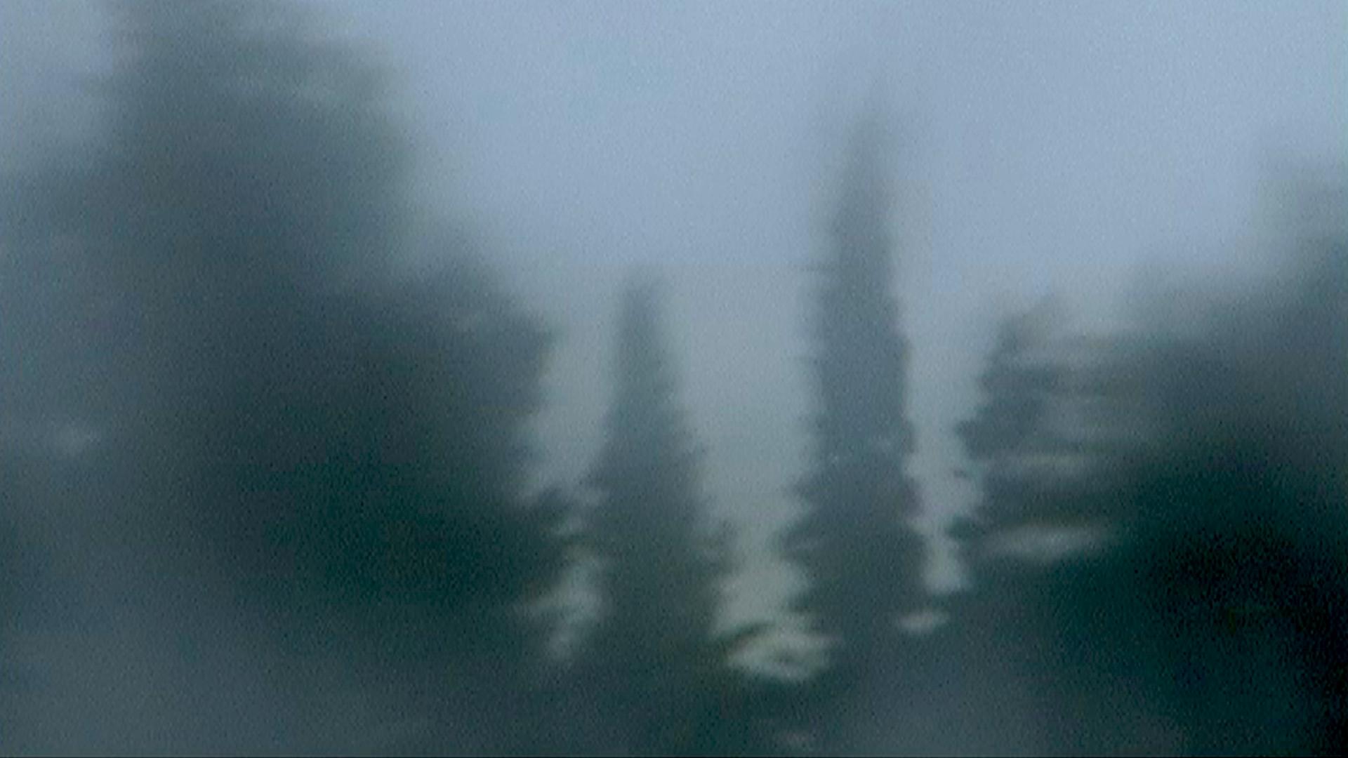 Les arbres dansent sous la tempête - Blandine Armand - Créations vidéos